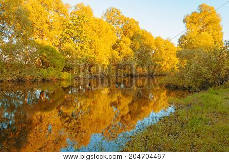 Autumn landscape. Forest autumn river and yellowed forest autumn trees along the river at the autumn sunset. Autumn forest landscape. Autumn forest background. Forest autumn nature