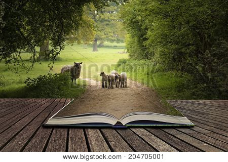 Beautiful Young Spring Lambs Playing In English Countryside Landscape Concept Coming Out Of Pages In