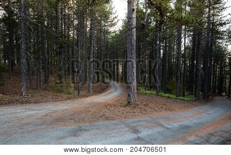 Empty rural mountain road passing through an idyllic forest with tall pine trees in Autumn. Troodos mountains Cyprus