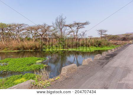 Bridge River Wetlands