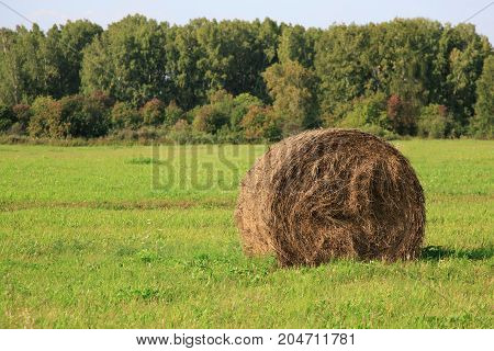 Big hay bay roll in a green field