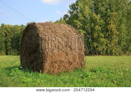 Big hay bay roll in a green field and blue sky