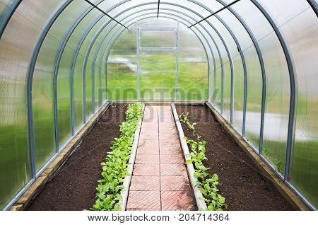 New Greenhouse Interior Background