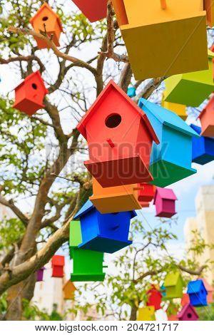 Many Birdhouses On A Mandarin Tree