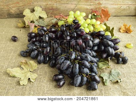 Bunches of the ripened black and green juicy grapes
