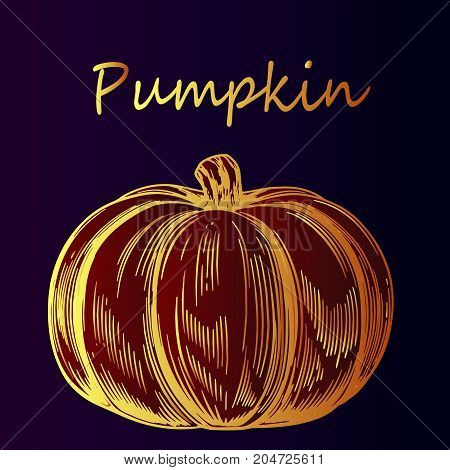 Vegetable pumpkin - close-up. Symbol of the holiday Halloween. Bright gradient sketch, idea for greeting card