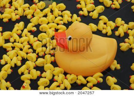 Duck Race Duck2