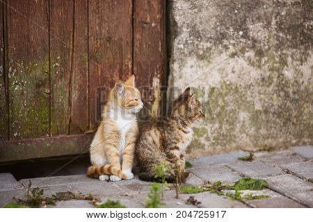 Two little kittens are sitting on the street. Lovely pet. Kittens are sitting on the street. Red and gray kittens. Kittens on the wall background. Little cute kittens