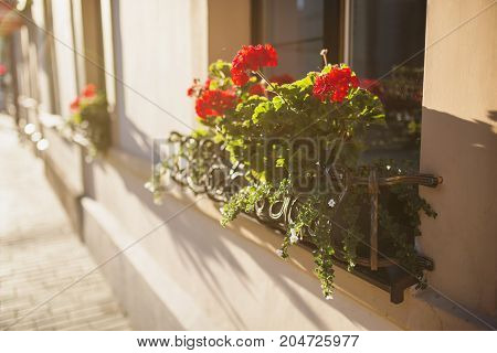 Beautiful well-kept balcony with red flowers with warm sunset. Walking around the European city. Balcony with flowers. Beautiful balcony. The balcony is flooded with sunlight. Balcony in the old house.