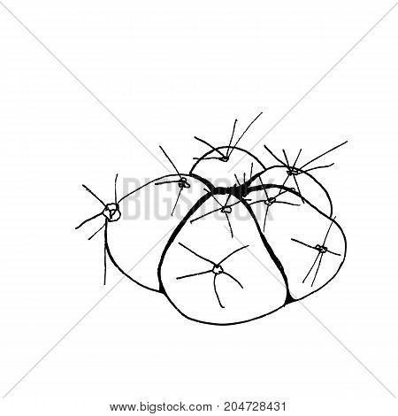 Hand Drawn Cactus Gymnocalycium Horstii Buenekeri, Liner Vector Illustration