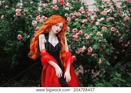 Red-haired lady girl with pale skin in a black dress. Lady with a red cape on her shoulders against a background of a bush of pink roses. Lady in park. Young lady. Lady in summer rose garden