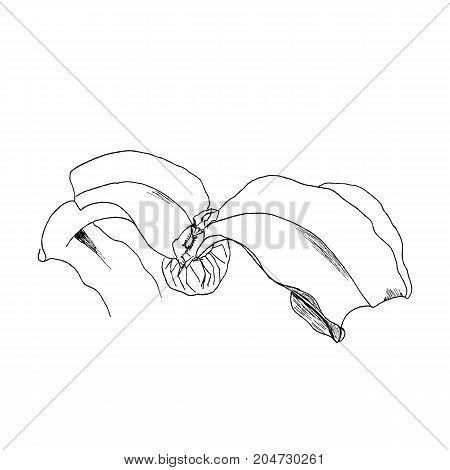 Welwitschia mirabilis, liner vector illustration on white background