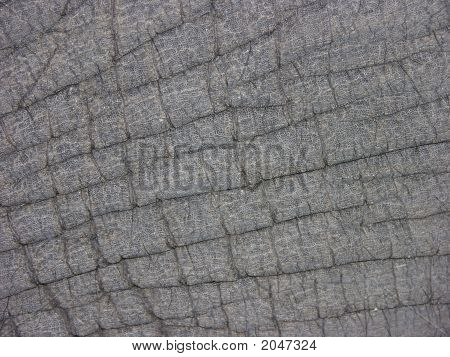 Elephant Skin Leather