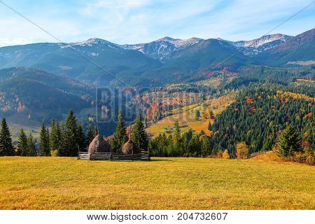 Autumn scenic landscape with golden trees orange bushes yellow grass and blue sky with clouds.