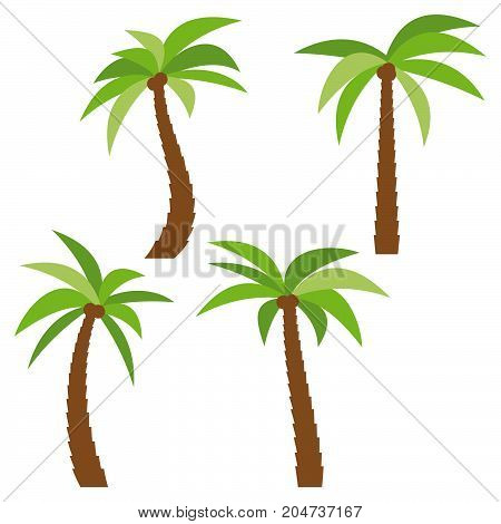 Set of four different cartoon palm trees isolated on white background. Vector illustration