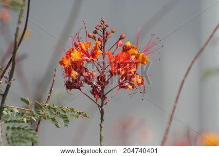 Strange orange and red flowers found in desert