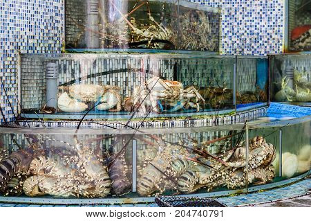 Huge lobsters crabs and other mollusk seafood are crammed into fish tanks at the seafood market in Sai Kung Hong Kong. Sai Kung village is famous for its many seafood restaurants and floating fish market.