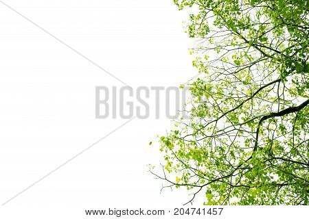 Green Leaves And Branches Isolated On White Background For Environment Nature Concept For Design And