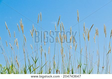 Dry Brown Grass