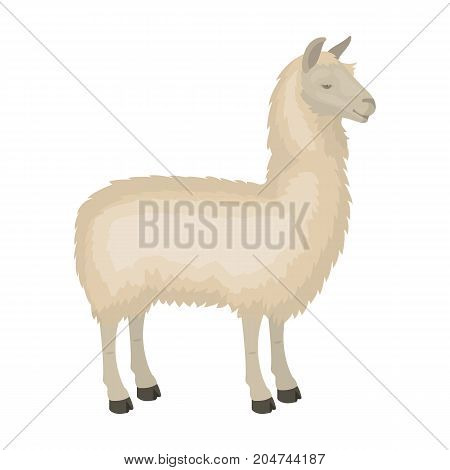 Lama, a South American pack animal. A lame, a cloven-hoofed mammal single icon in cartoon style vector symbol stock illustration .