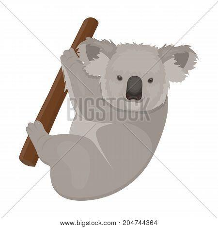 Kuala, marsupial bear on a branch of eucalyptus. Wild mammal of koala single icon in cartoon style vector symbol stock illustration .