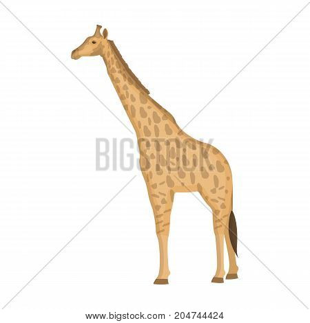 Giraffe is the highest land animal. A wild animal, a giraffe single icon in cartoon style vector symbol stock illustration .