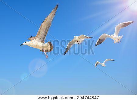 a flock of sea gulls flies high in the sky amidst the bright sunlight