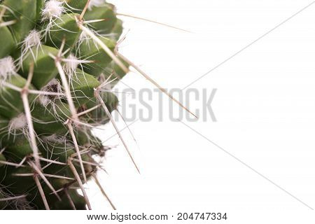 Beautiful home cactus in a red pot isolated on white background.