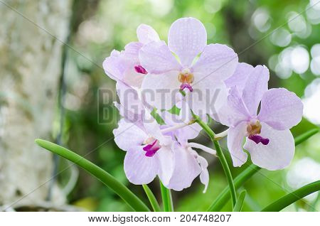 Purple orchids flower blossom in a garden,decoration flowers