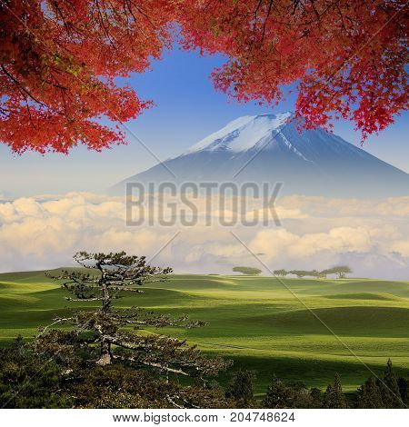 Beautiful Field With Red Maple And Mountain Behind The Tree