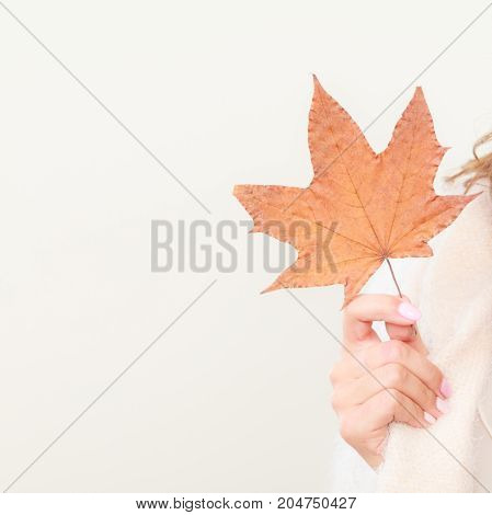 Female autumnal model. Girl with maple leaf in hand copy space text area