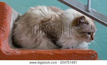 Helping Homeless Abandoned Cats Concept. Cute Abandoned Cat Sitting On The Steps.
