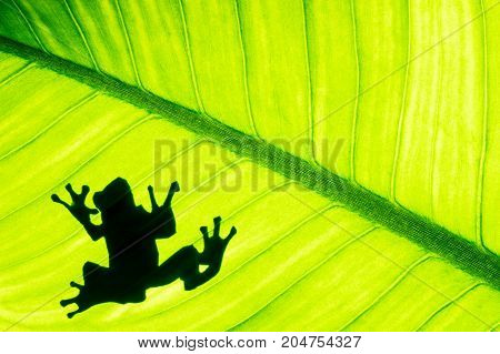 Frog shadow on natural green leaf background tropical foliage texture.