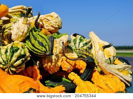 Pile of Pumpkins with Warts at a fresh market. Copy space.