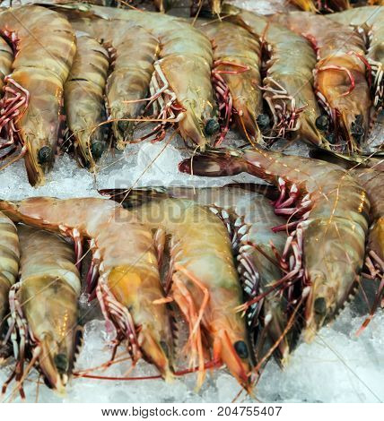 Shrimp Prawns Raw