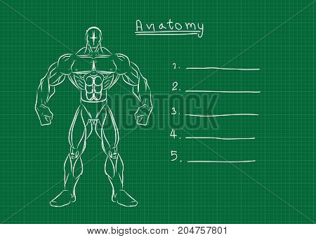 Male anatomy front reference.illusstration human body.Muscle tone.