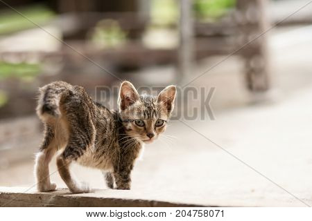 tabby cat look at you - stock image