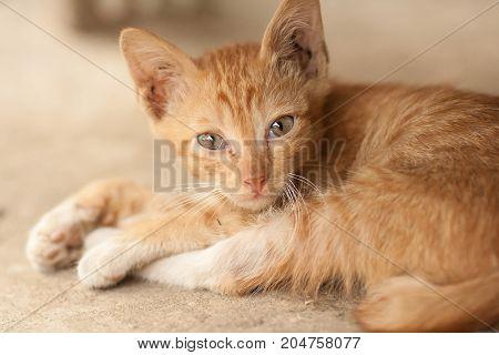 Orange tabby cat sleep on floor - stock image