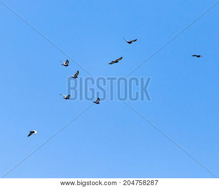 a flock of pigeons in the sky