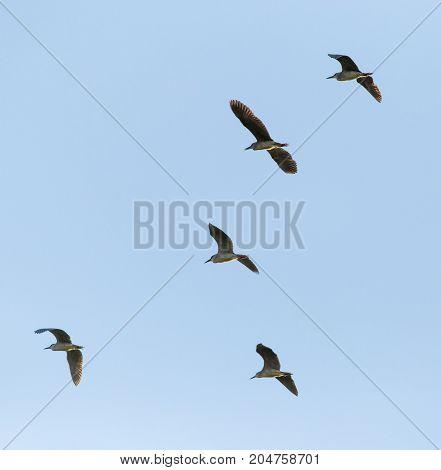 A flock of birds in the blue sky