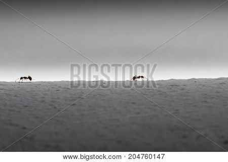 silhouette of two ants.Business concept - stock image