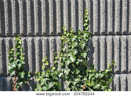 Soundproof wall of a building in summer