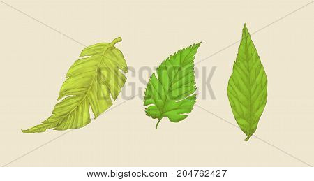 Some example of leaf, digital painting illustration