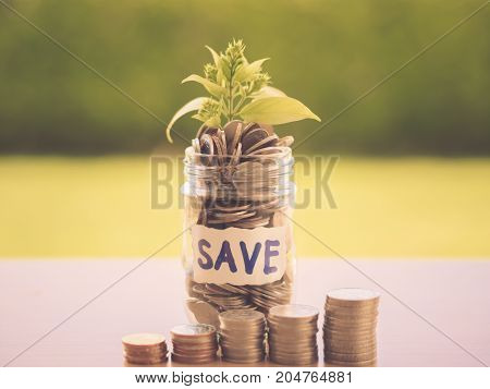 Retro abstract money saving small baby tree with glass jar Coins with stack coins on table with green tree background.