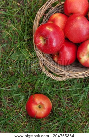 Juicy Red Apples In A Basket And Scattered On Green Grass, Top View