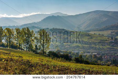 Range Of Poplar Trees By The Road On Hillside
