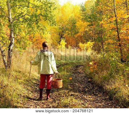 Woman with wicker basket for mushrooms and berries walking on a dirt road in the forest autumn sunny day. Autumn landscape. Fall rural background