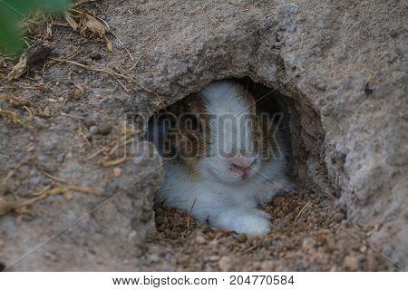 Little Rabbit In Hole