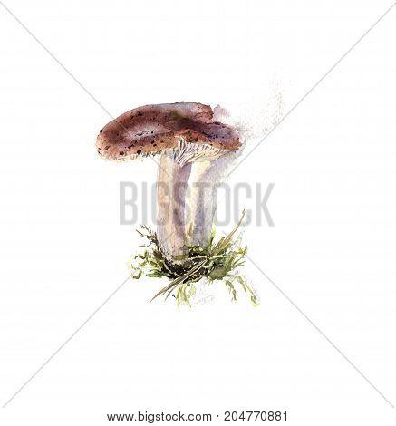 Amanita, poisonous autumn mushroom, hand drawn botany watercolor
