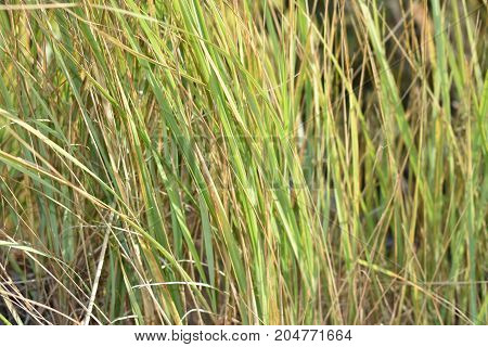 beautiful landscape of various kinds of grass